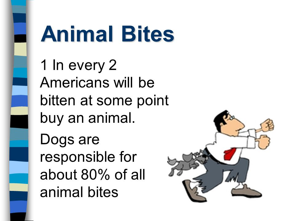 Animal Bites 1 In every 2 Americans will be bitten at some point buy an animal.