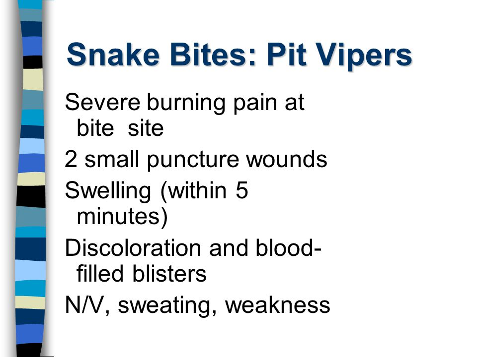 Snake Bites: Pit Vipers