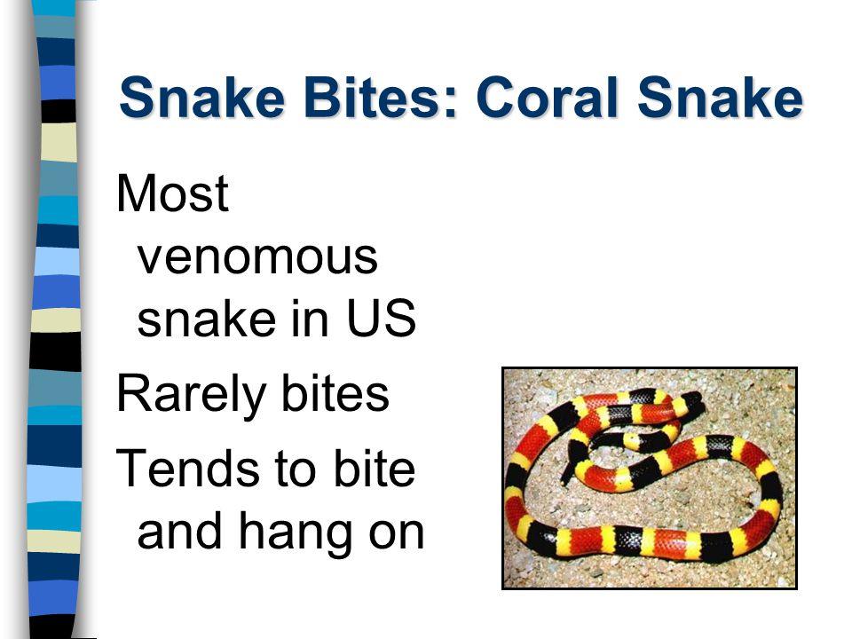 Snake Bites: Coral Snake