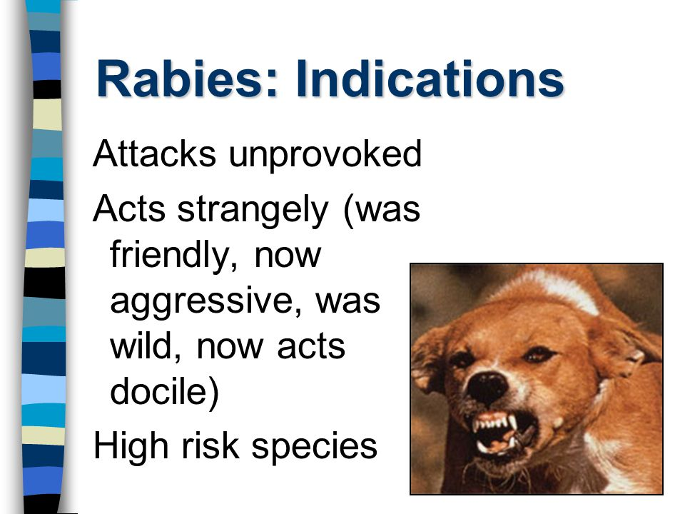 Rabies: Indications Attacks unprovoked