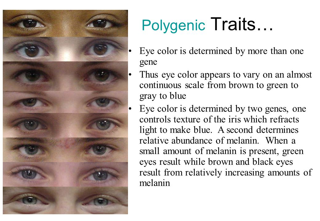 Polygenic Traits… Eye color is determined by more than one gene