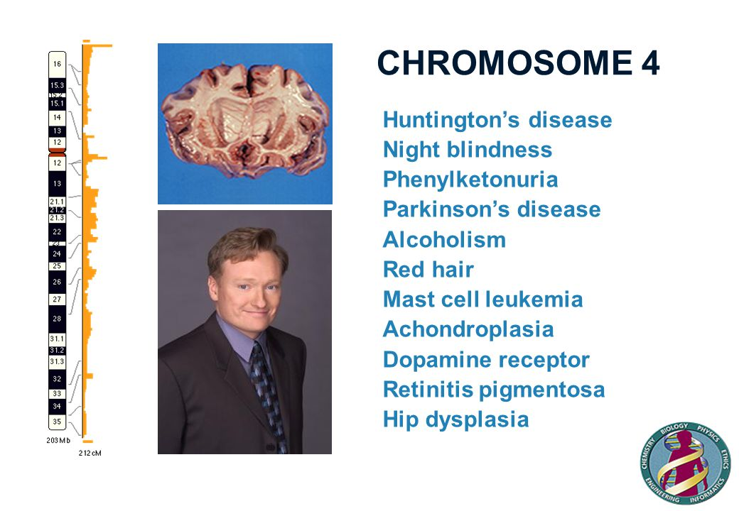 CHROMOSOME 4 Huntington's disease Night blindness Phenylketonuria