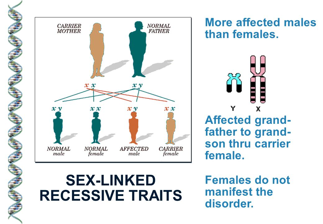 SEX-LINKED RECESSIVE TRAITS