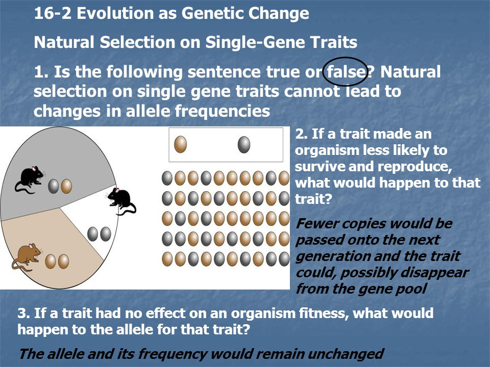 16-2 Evolution as Genetic Change