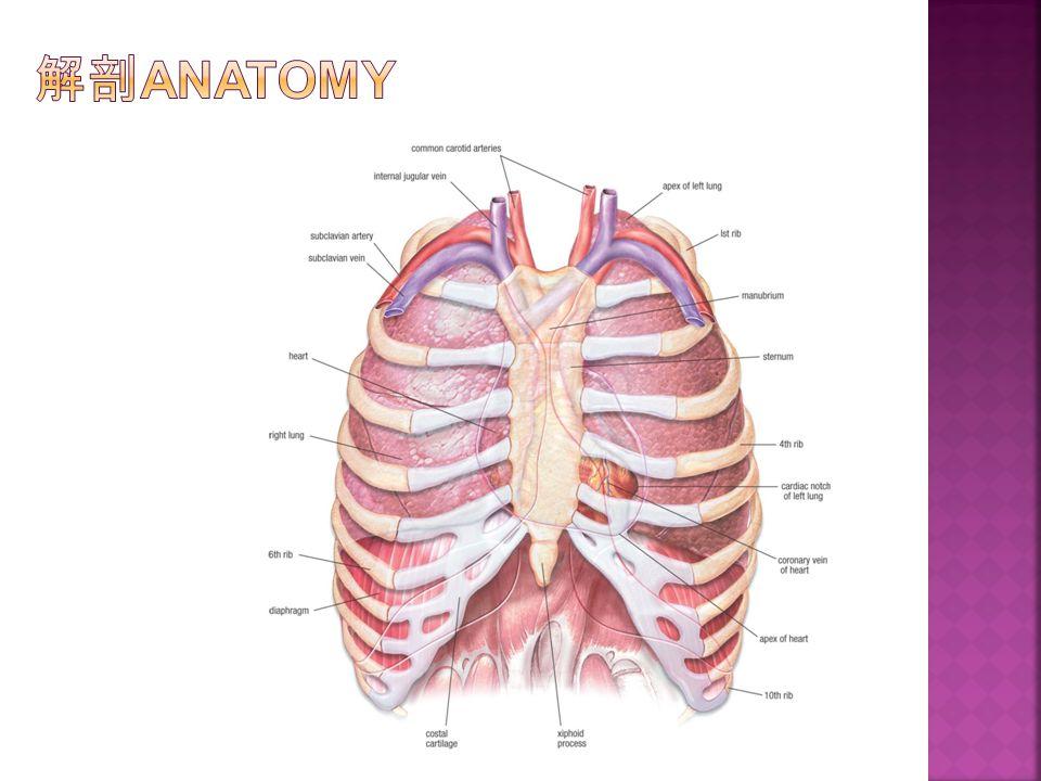 解剖Anatomy
