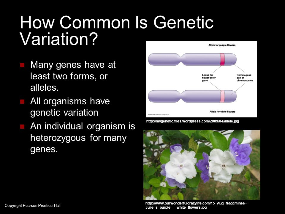 How Common Is Genetic Variation