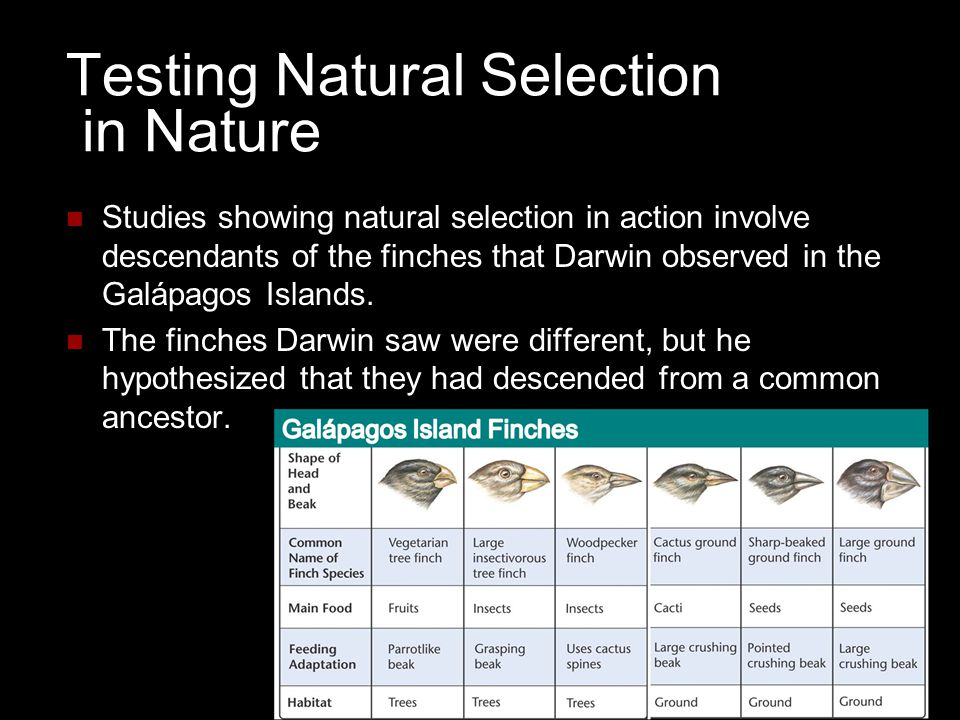 Testing Natural Selection in Nature