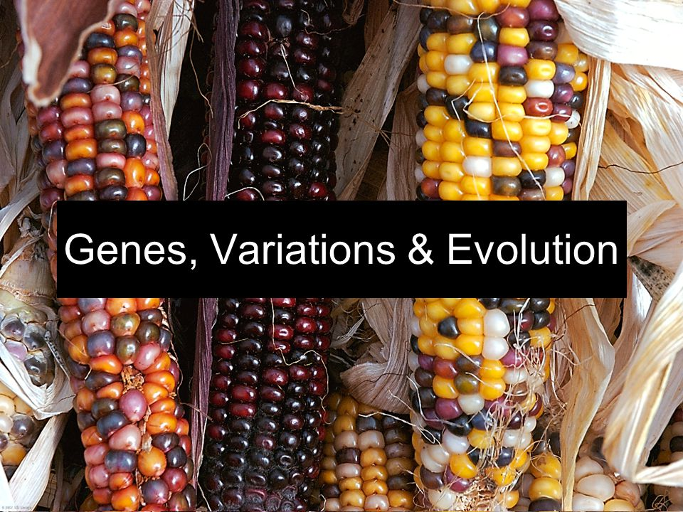 Genes, Variations & Evolution