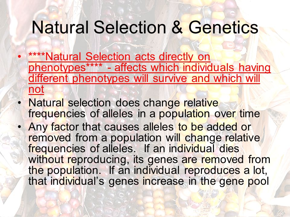 Natural Selection & Genetics