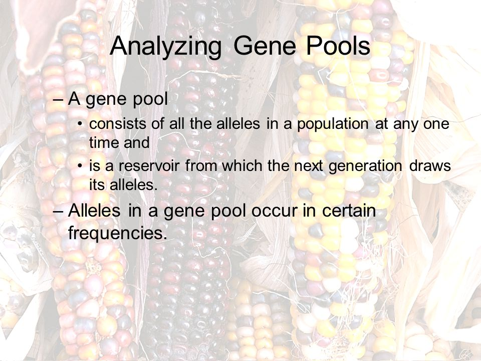 Analyzing Gene Pools A gene pool