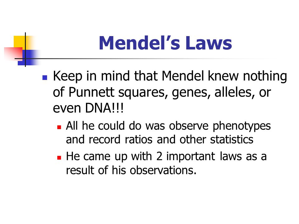 Mendel's Laws Keep in mind that Mendel knew nothing of Punnett squares, genes, alleles, or even DNA!!!
