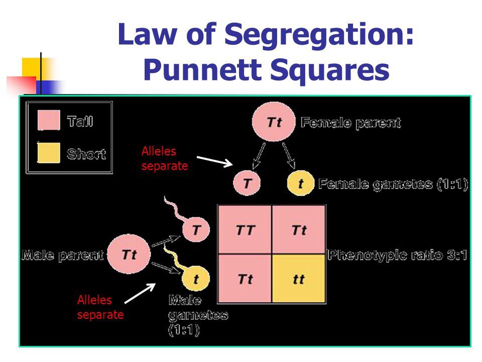 Law of Segregation: Punnett Squares
