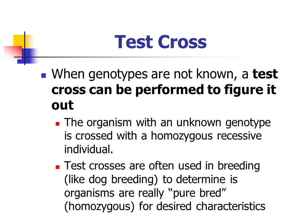 Test Cross When genotypes are not known, a test cross can be performed to figure it out.