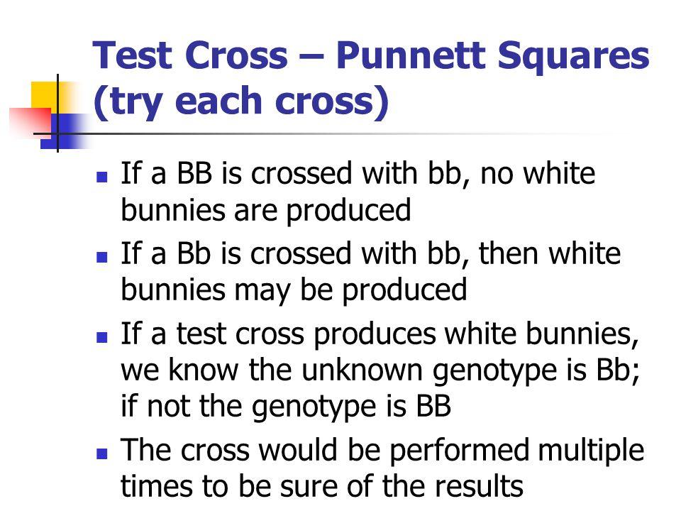 Test Cross – Punnett Squares (try each cross)