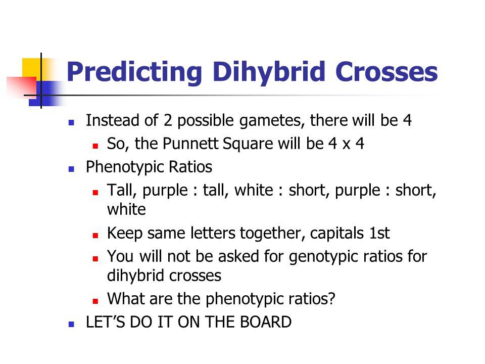 Predicting Dihybrid Crosses
