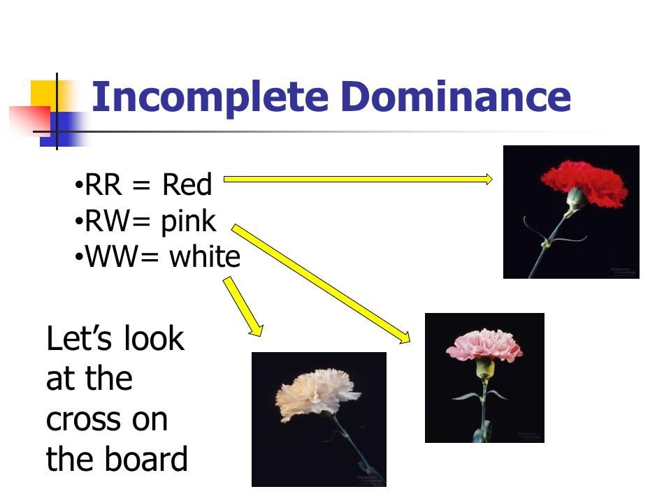 Incomplete Dominance Let's look at the cross on the board RR = Red