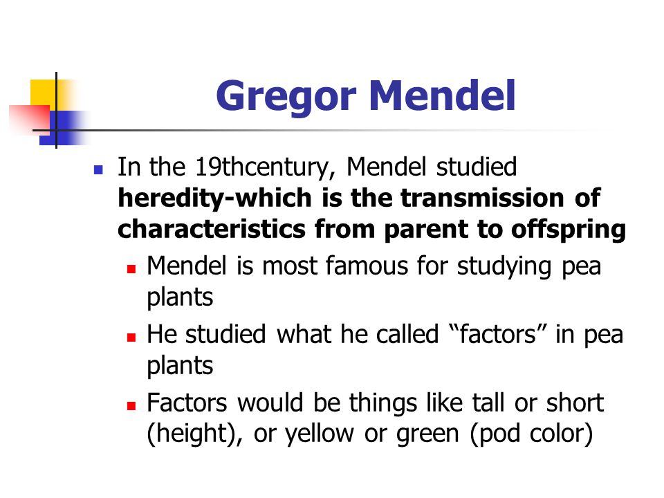 Gregor Mendel In the 19thcentury, Mendel studied heredity-which is the transmission of characteristics from parent to offspring.