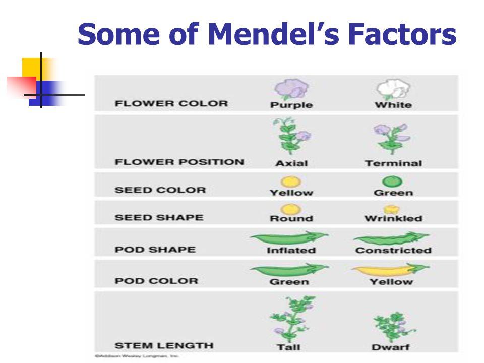 Some of Mendel's Factors