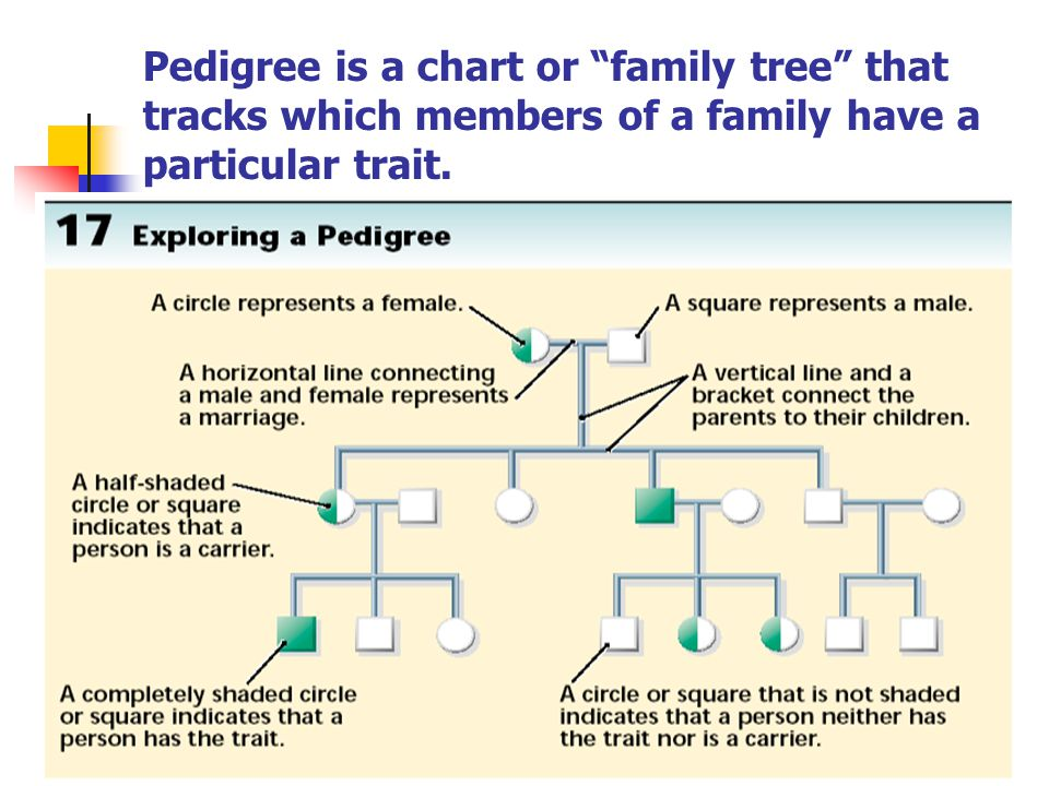Pedigree is a chart or family tree that tracks which members of a family have a particular trait.