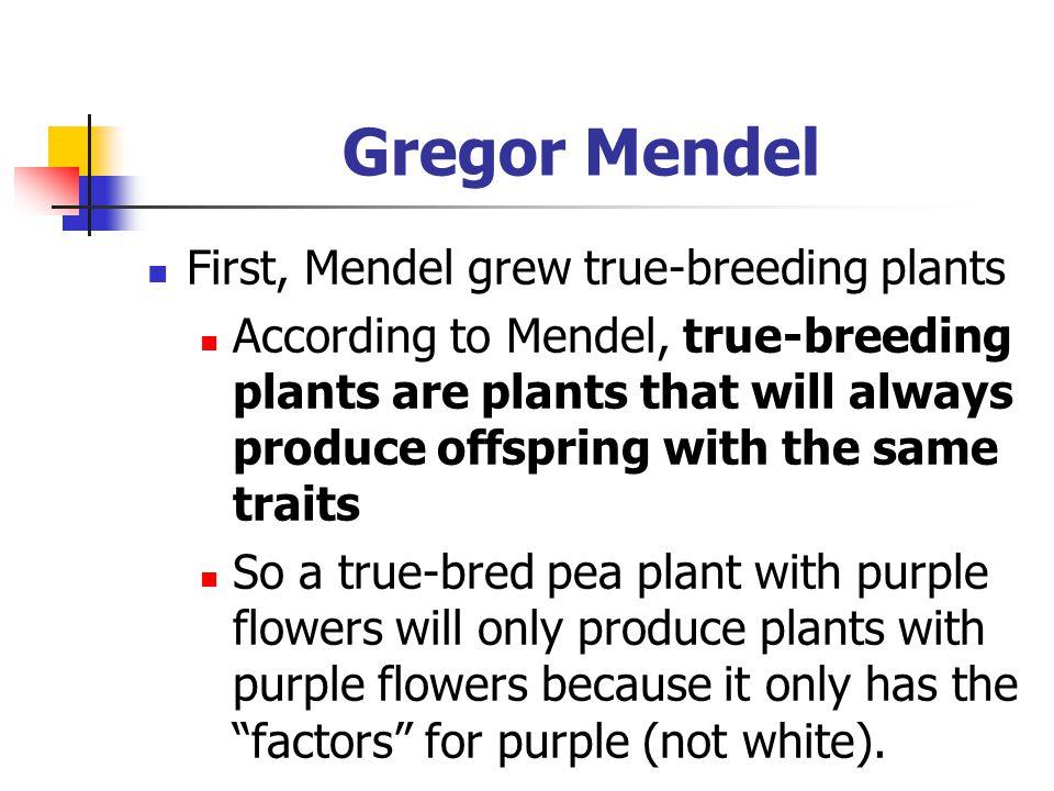 Gregor Mendel First, Mendel grew true-breeding plants