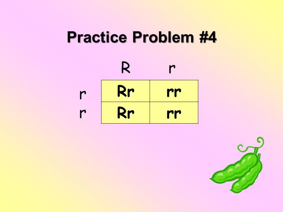 Practice Problem #4 R r Rr rr r