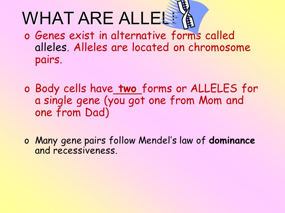 WHAT ARE ALLELES Genes exist in alternative forms called alleles. Alleles are located on chromosome pairs.