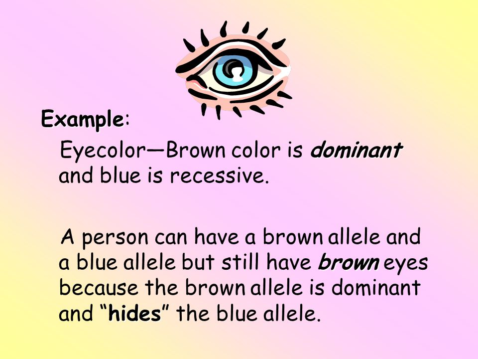 Example: Eyecolor—Brown color is dominant and blue is recessive.