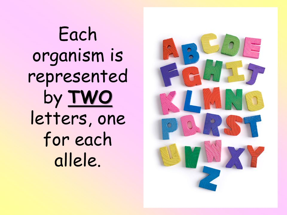 Each organism is represented by TWO letters, one for each allele.