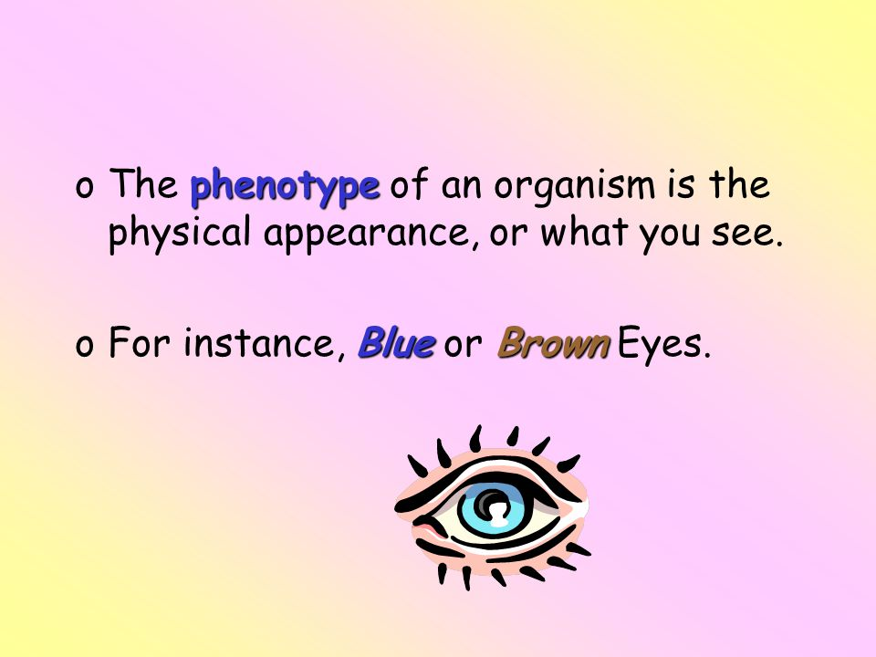 The phenotype of an organism is the physical appearance, or what you see.