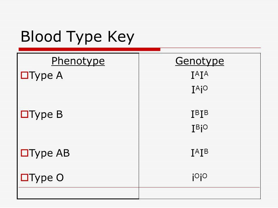 Blood Type Key Phenotype Type A Type B Type AB Type O Genotype IAIA