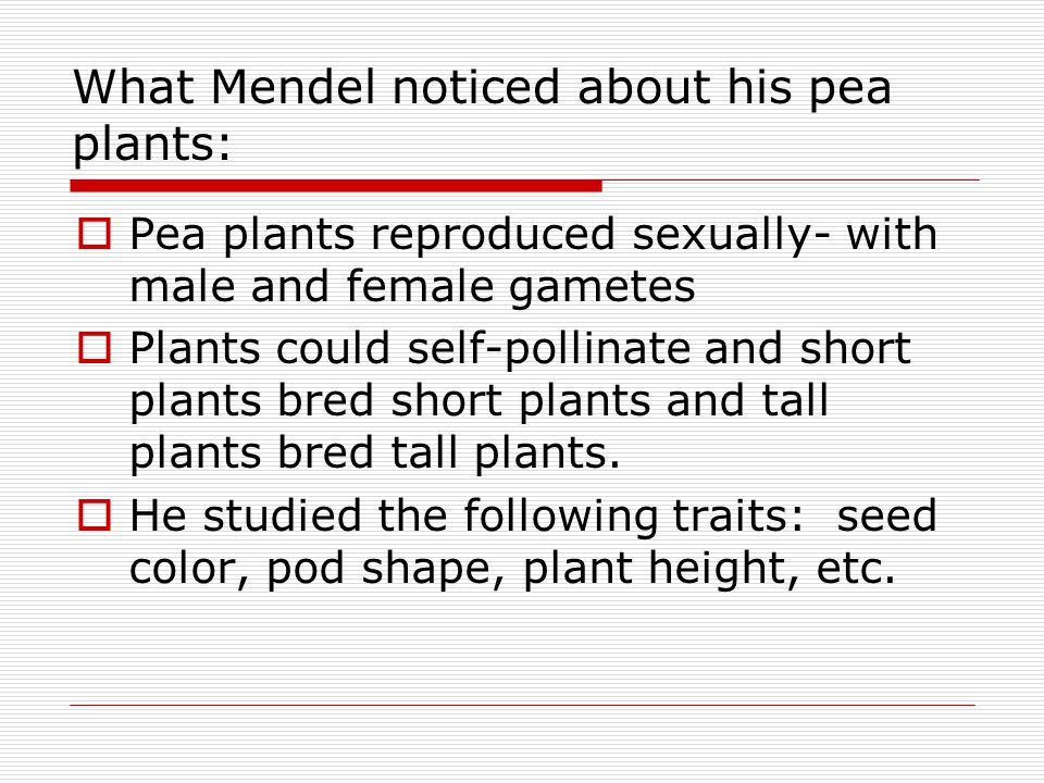 What Mendel noticed about his pea plants: