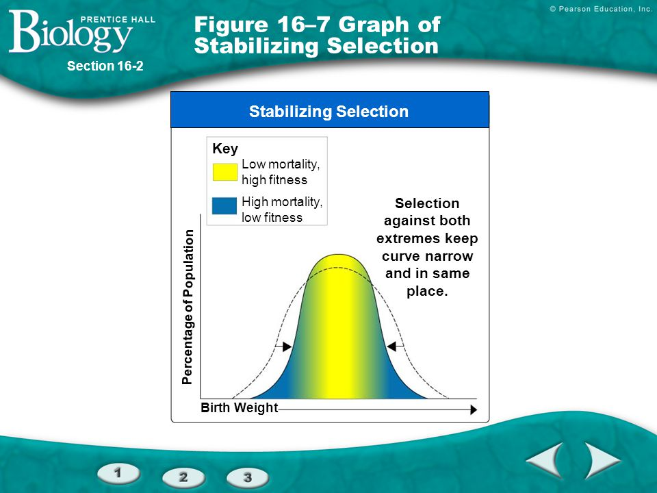 Figure 16–7 Graph of Stabilizing Selection