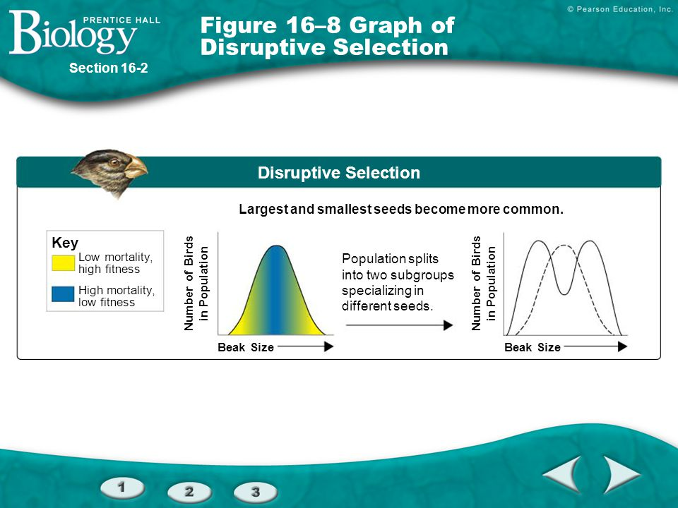 Figure 16–8 Graph of Disruptive Selection