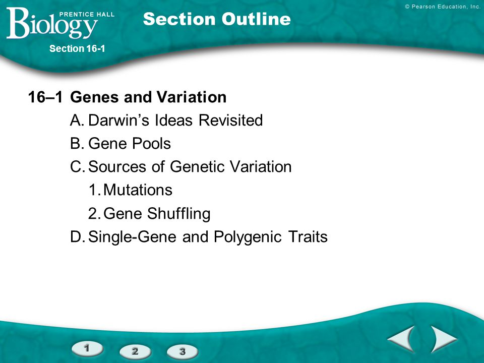 Section Outline 16–1 Genes and Variation A. Darwin's Ideas Revisited