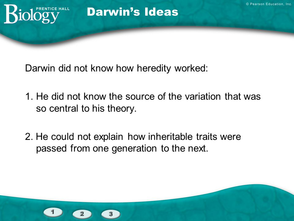 Darwin's Ideas Darwin did not know how heredity worked: