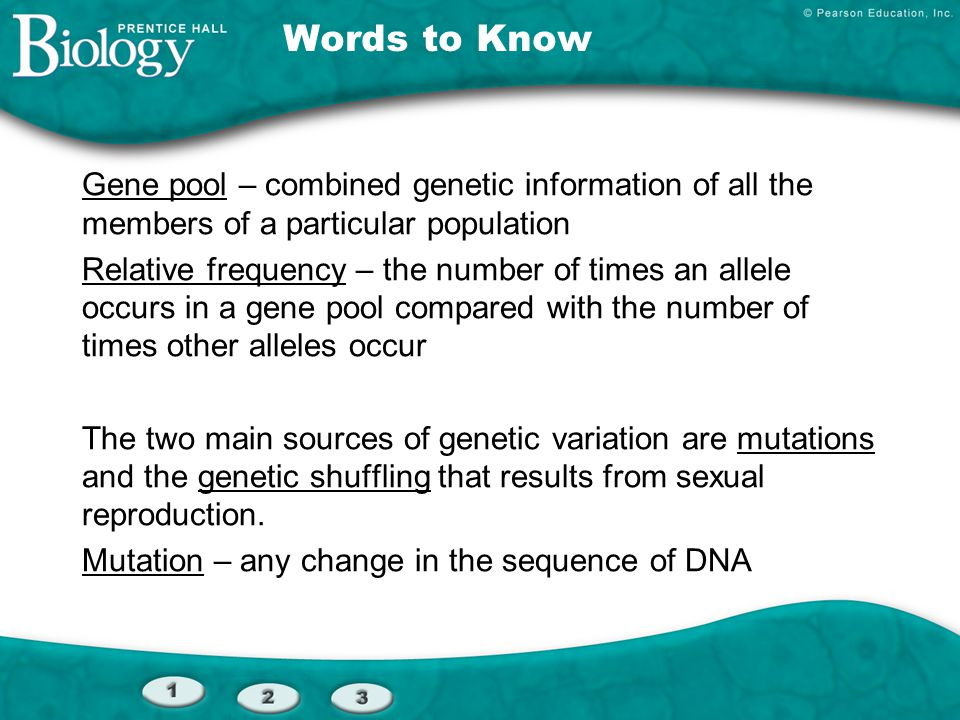 Words to Know Gene pool – combined genetic information of all the members of a particular population.