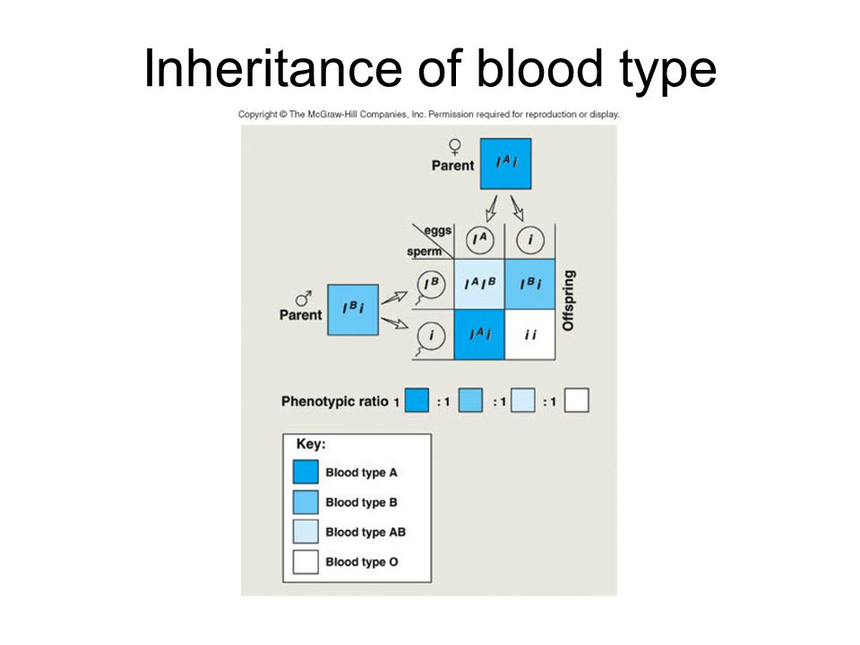 Inheritance of blood type