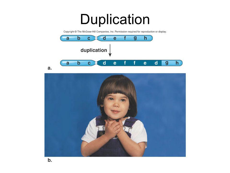 Duplication
