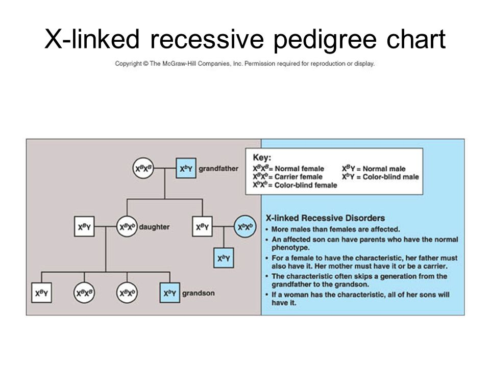 X-linked recessive pedigree chart