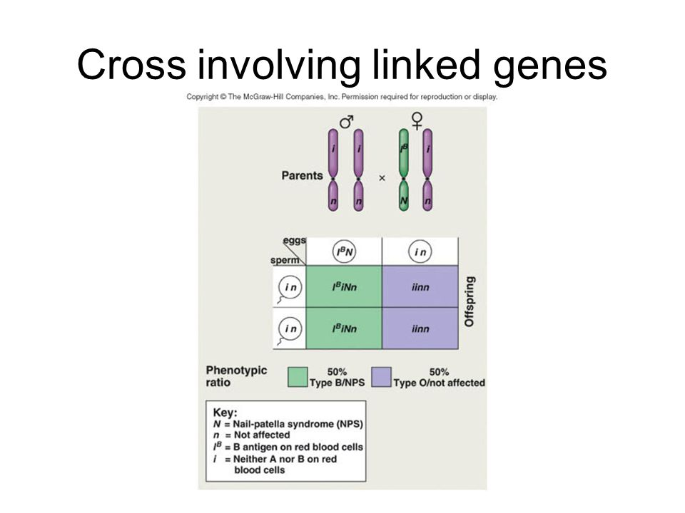 Cross involving linked genes