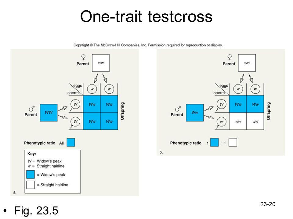 One-trait testcross Fig. 23.5