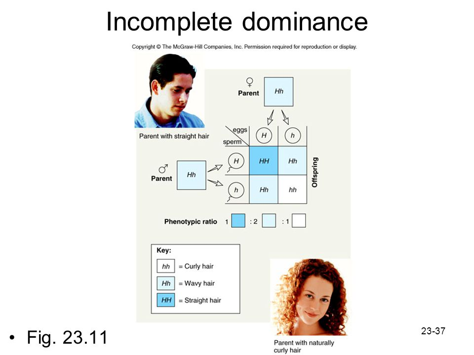 Incomplete dominance Fig. 23.11
