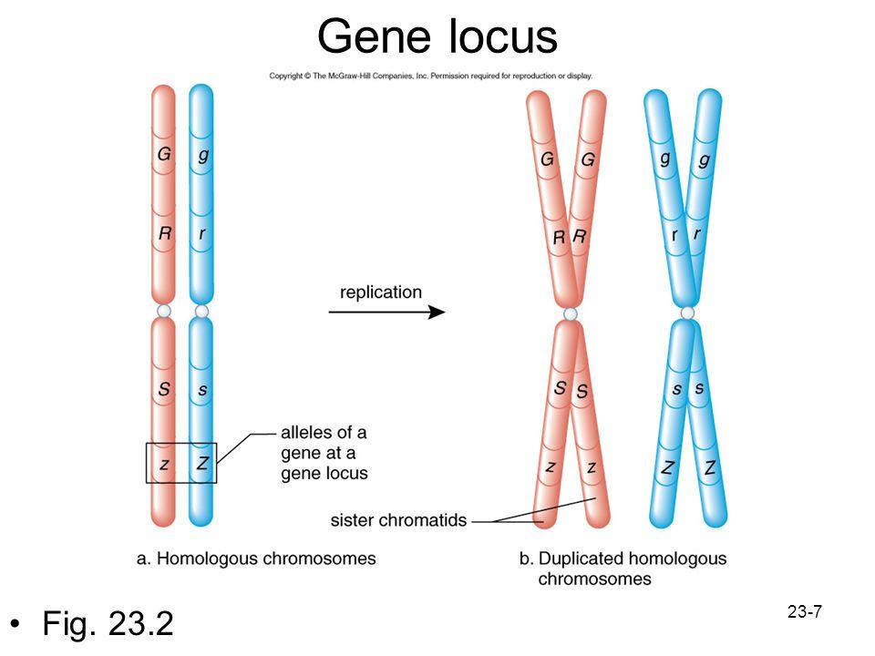 Gene locus Fig. 23.2