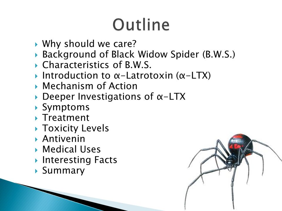 Outline Why should we care Background of Black Widow Spider (B.W.S.)