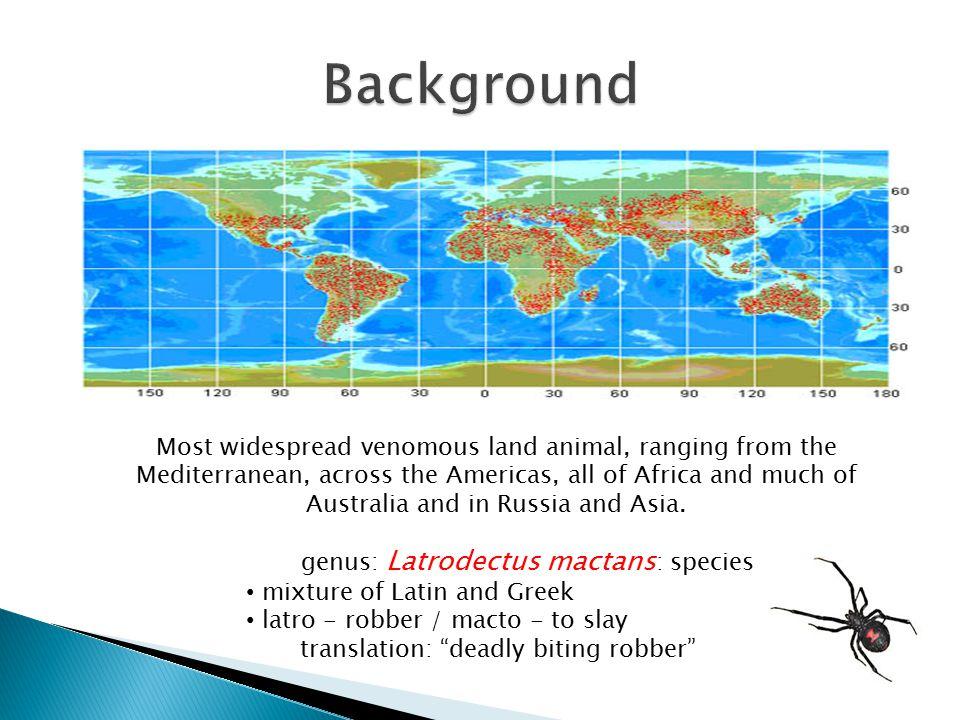 genus: Latrodectus mactans: species