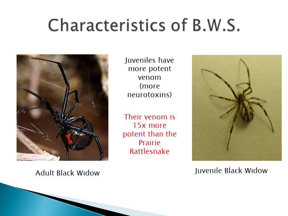 Characteristics of B.W.S.