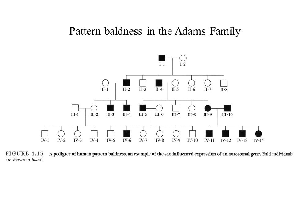 Pattern baldness in the Adams Family