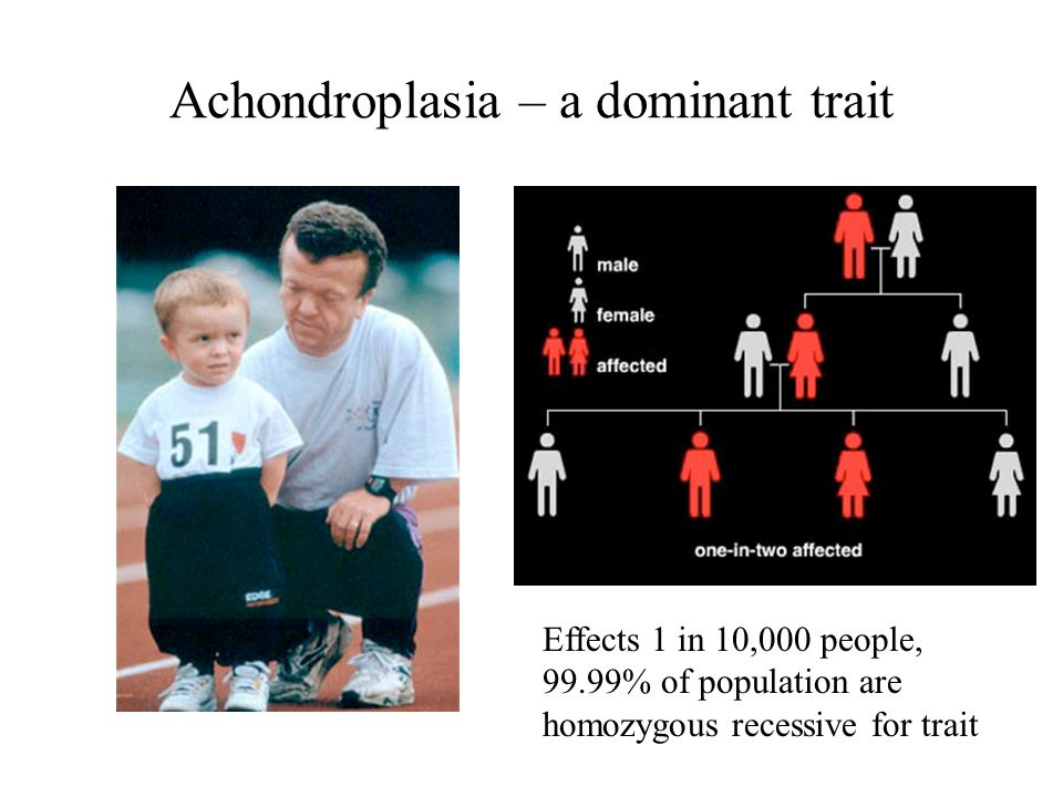 Achondroplasia – a dominant trait