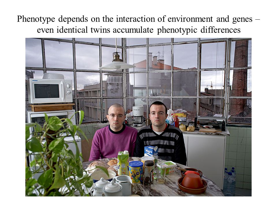 Phenotype depends on the interaction of environment and genes – even identical twins accumulate phenotypic differences