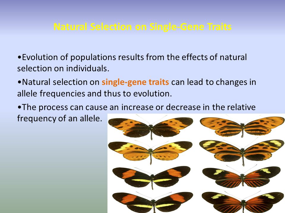 Natural Selection on Single-Gene Traits